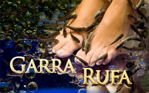 45 minut PÉČE O NOHY v podání pedikúry rybiček GARRA RUFA! Kompletní péče těchto živých tvorů!