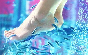 RYBIČKOVÁ TERAPIE Garra Rufa: léčba a pedikůra v jednom Zbavte se kožních onemocnění či si pouze užijte účinnou pedikůru pomocí rybičkové terapie. 15 minut ošetření pro zdravější a krásnější kůži.