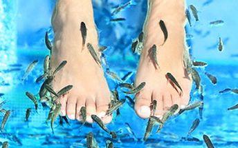 Rybičky Garra Rufa: rybí TERAPIE PRO VAŠE CHODIDLA 60 minut ozdravné a bezbolestné rybičkové masáže pro péči o nohy a vyživující peeling kůže. Užijte si netradiční formu masáže a dopřejte svým chodidlům péči.
