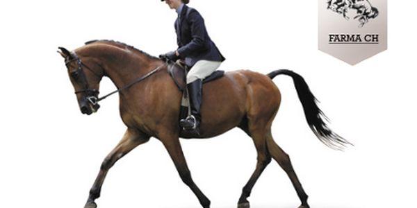 Hodinová výuka jízdy na koni s osobním instruktorem jen za 175 Kč!