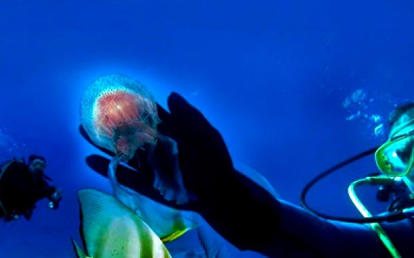 Týdenní kurz potápění na ostrově Brač za bezkonkurenční cenu 2500 Kč! Kurz probíhá pod dohledem zkušených instruktorů! Můžete ho spojit s příjemnou dovolenou s rodinou! Po absolvování kurzu obdržíte potapěčskou licenci!