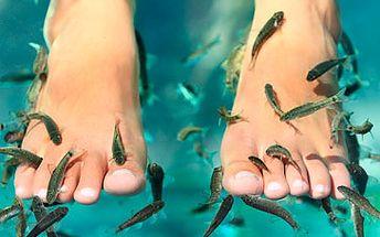 Rybičky GARRA RUFA - celosvětový hit v oblasti péče o pokožku a pedikúry za skvělých 340 Kč namísto původních 600 Kč! Koupel nohou nebo celého těla s rybkami Garra Rufa v délce 2x30 minut! Dopřejte si přírodní relaxační koupel, která Vás nejen dokonale uvolní, ale prospěje i Vaší pokožce. Chcete-li mít hladkou a zdravou kůži na nohou, seznamte se s unikátní léčivou metodou! Zažijte doslova na vlastní kůži úžasné léčivé účinky rybiček Garra Rufa. Sleva 44 %!