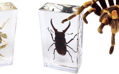 Hmyz ve skle! Reálný hmyz zalitý v akrylátové pryskyřici! Krab, roháč, sklípkan, sršeň...