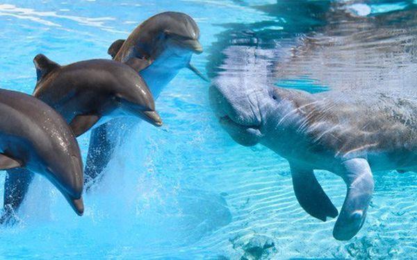 Delfinárium nebo celodenní Norimberk! Nádherná ZOO s delfináriem v laguně s unikátními kapustňáky. TIP na výlet pro celou rodinu!