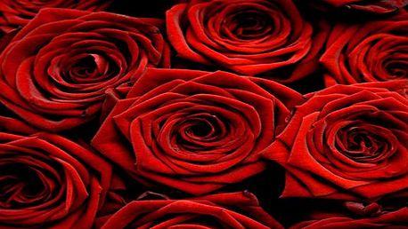 Krásné čerstvé kolumbijské růže 70 cm v centru Prahy! Obdarujte svou drahou polovičku, přítelkyni, kamarádku!
