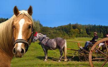 Hodinová projížďka bryčkou v přírodě pro všechny, co milují koně a přírodu, ale nemohou nebo nechtějí sami jezdit. Romantická projížďka pro celou rodinu či přátele jen za 499 Kč! Vyjížďka Vás vyjde jen na 166 Kč za osobu!