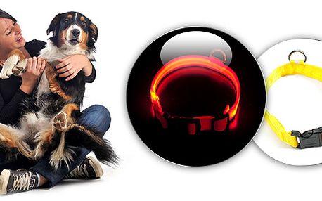 Svíticí obojky pro psy pro večerní a noční venčení v různých velikostech se slevou 45%