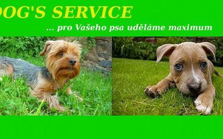 Hlídání pejsků v domácím prostředí ! Pouze 150 Kč za pohlídání Vašeho pejska na jeden den ( kupony lze sčítat )! Domácí prostředí i nadstandadní péči zajistí Dog's Service ! SLEVA 50 %