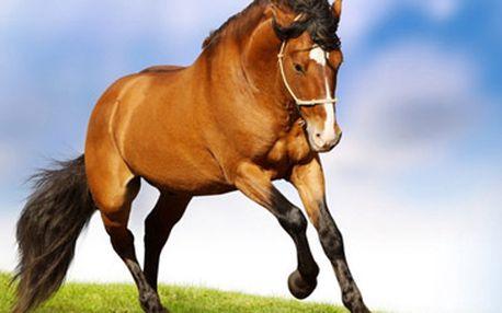 199 Kč za 30-ti minutovou vyjížďku na koni v samém srdci Moravského krasu.