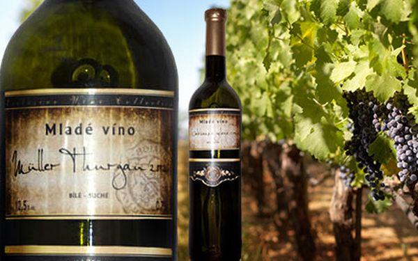 6 kvalitních mladých vín z vinařství Lekavý