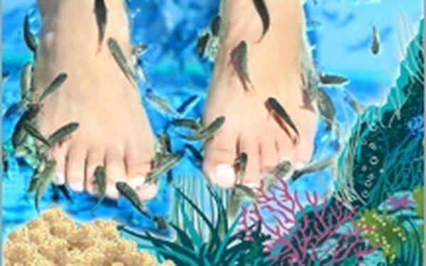 Rybí pedikůra