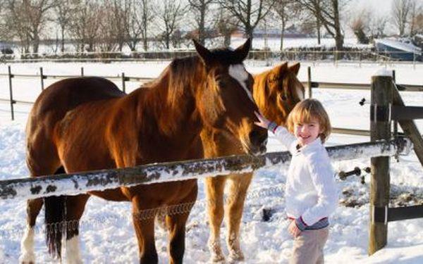 349 Kč za romantickou vyjížďku na koni!