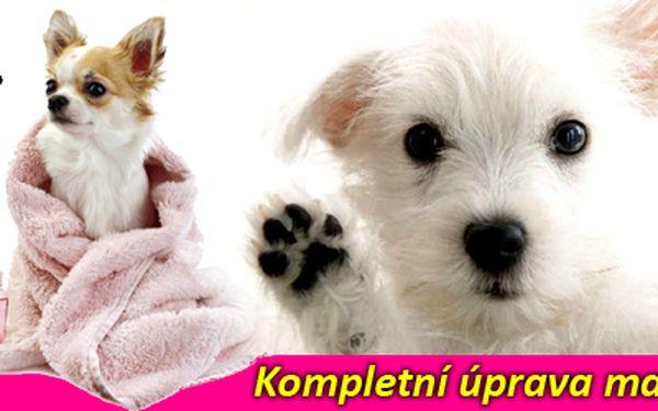 Dopřejte Vašemu psímu miláčkovi během sychravého počasí kompletní úpravu zahrnující koupání, sušení, střih (dle Vašeho přání), krácení drápků a čištění uší! Vánoční nadílka i pro mazlíčky!