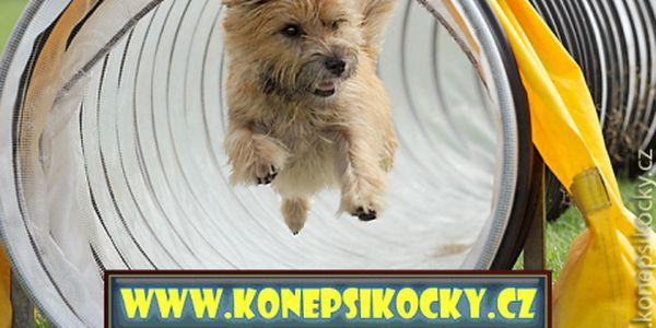 Základní výcvik psa nebo kurz agility. Hloubětín, cvičiště ZKO. 11 lekcí á 60 minut. Možno kombinovat dle Vašeho přání. Výcvik s profesionály. Je čas na změnu. Poslouchat musí on.