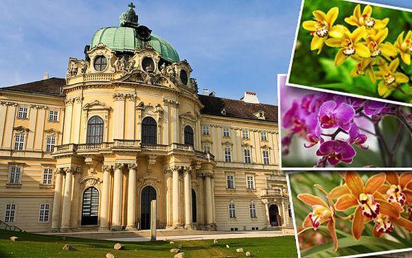 Zájazd na najväčšiu výstavu orchideí v Rakúsku len za 17,50€. Neuveriteľné množstvo vzácnych kvetín v oranžérii aj majestátny kláštor, ktoré vás nadchnú. Urobte si výlet bez šoférovania a stresu s parkovaním a cestou, dajte si pokojne napr. šampanské