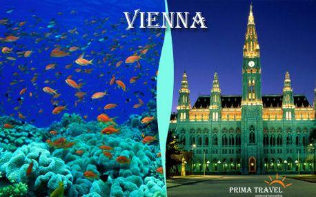 Výlet do Viedne s prehliadkou tropického morského sveta, akvária žralokov, domu trópov či historického centra Viedne len za 16 €! Navštívte najväčšie morské akvárium v Rakúsku so zľavou 40%!