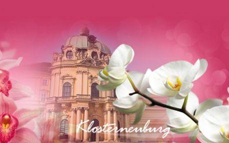 Výstava orchideí v rakúskom Klosterneuburgu – 1 denní zájazd len za 17.50 €! Navštívte najväčšiu výstavu orchideí v Rakúsku! Neuveriteľné množstvo vzácnych kvetín v oranžérii aj majestátny kláštor vás nadchnú!