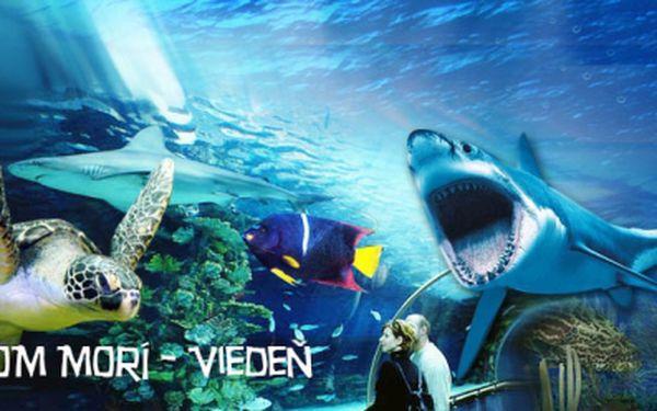 1 dňový zájazd do Viedne s návštevou morského akvária len za 16 €! Ponorte sa do fascinujúceho sveta žralokov a objavte tajomstvá tropického morského sveta!