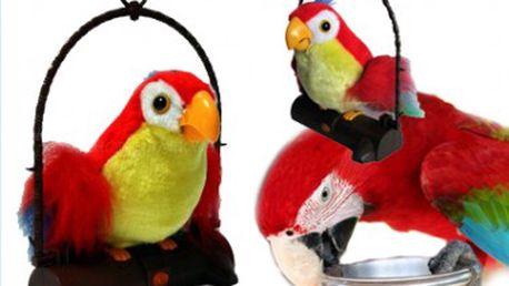 Mluvící papoušek co opakuje vaše slova za skvělou cenu. Jistě si s ním užijete spoustu zábavy.