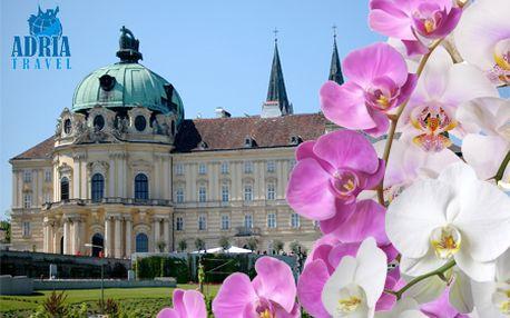 POSLEDNÉ VOĽNÉ MIESTA: Celodenný zájazd pre 1 osobu na medzinárodnú výstavu orchideí v rakúskom starobylom mestečku Klosterneuburg od CK Adria Travel len za 16,90 €!
