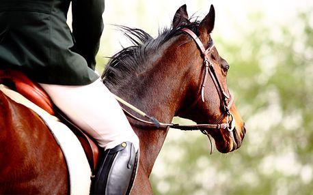 Jazda na koni je vzrušujúca a zábavná, ale pôžitok z nej budete mať až keď sa naučíte správne s koňom zaobchádzať a porozumieť mu. 90-minútový tréning jazdy s profesionálnym trénerom len za 9,90 €.