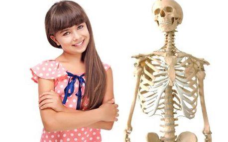 Model lidské kostry v životní velikosti s 50% slevou!