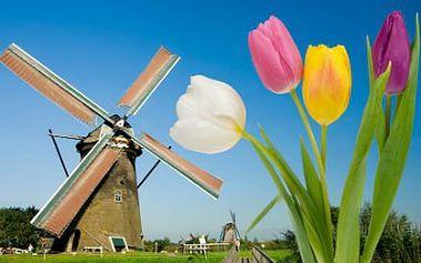 2denní výlet nejen za holandskými tulipány