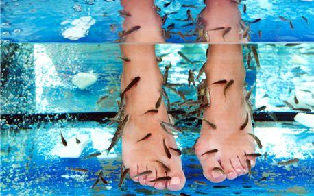 Originálny 25-minútový prírodný peeling nôh rybičkami Garra Rufa v špeciálne upravenom akváriu! Príjemné prostredie s výhľadom na Bratislavský hrad vás určite očarí!