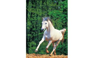 Puzzle 500 dílků - party puzzle / clementoni - bílý kůň