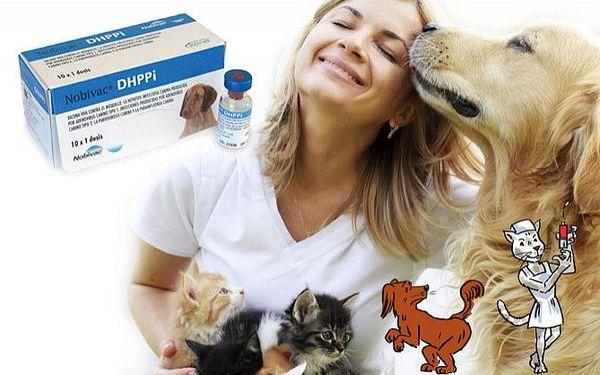Odborná vakcinace pejsků a kočiček