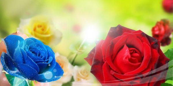 4x 50 semínek krásných růží ve čtyřech různých barvách jen za 199 Kč včetně poštovného! Červené, modré, žluté a fialové! Vypěstujte si vlastní růže od semínka! Sleva 74%!