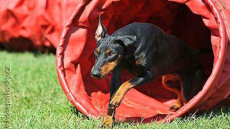 Výcvik psů - 10 lekcí jen za 750 Kč!