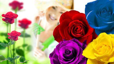 4x 50 semínek růží ve čtyřech různých barvách
