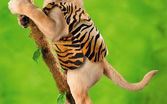 DINO kvalitní puzzle 500 dílků - Pes akrobat