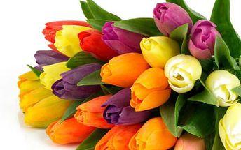 Kytice tulipánů či růží s možností rozvozu