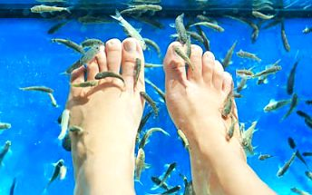 40-60 minut pedikúry rybkami Garra Rufa pro 1-2 osoby