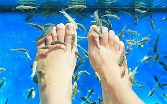 Léčebná kúra rybičkami Garra Ruffa již od 159 Kč!