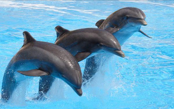 Delfinárium a Zoo v Norimberku. Odměna za vysvědčení pro Vaše děti! Možnost prohlídky města. Nový termín 5.7!