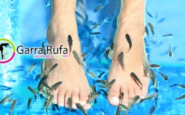 Nevšední ošetřující PEDIKÚRA s RYBIČKAMI GARRA RUFA za skvělých 129 Kč! Rybičky intuitivně vyhledávají, kde kůže nemá správnou funkci, skvěle ji regenerují a podporují léčbu kožních onemocnění!