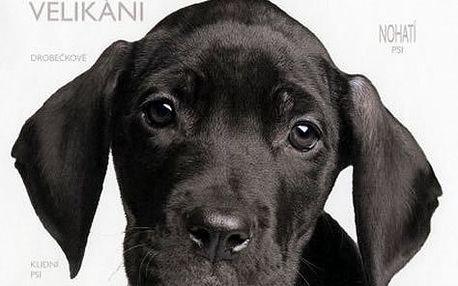 Alderton David: Pes na míru - Jak si vybrat správného psa