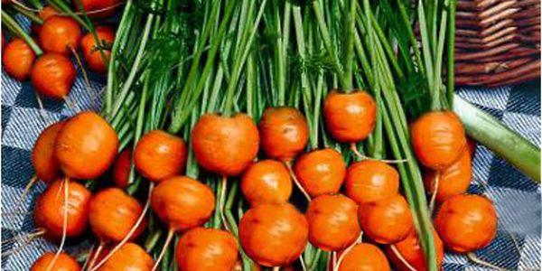 Semínka - malá kulatá mrkev a poštovné ZDARMA! - 210