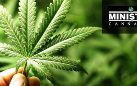 Sleva na semínka konopí - Sleva 40% ne semínka konopí holandské seed banky Ministry od Cannabis!