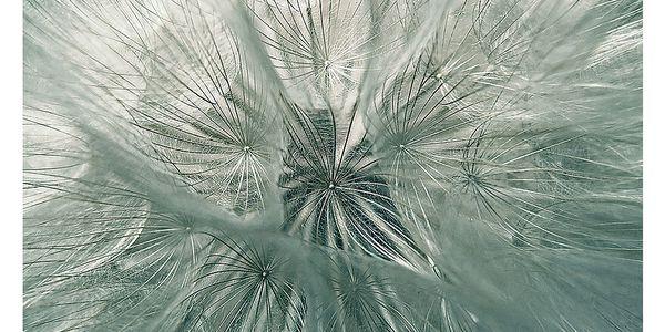 Fotoobraz Pampeliškové chmýří, 90x60 cm