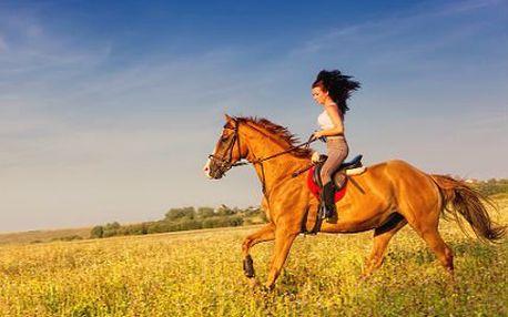 Hodinová výuka jízdy na koni s instruktorem!