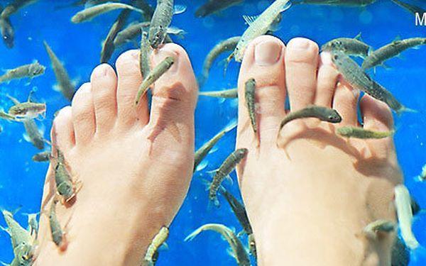 Lázeň nohou s rybkami Garra rufa