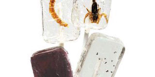 Lízátko Insekt - smlsněte si na netradiční pochoutce!