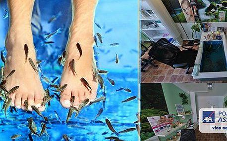 Dopřejte nožkám relax v BrněnskémStudiu DIANA - 30 nebo 60 minut hýčkání rybičkami Garra Rufa! Zatočte s tvrdými patami, lupénkou i ekzémem!