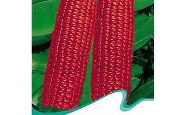 10 semínek - červená kukuřice a poštovné ZDARMA! - 34905944