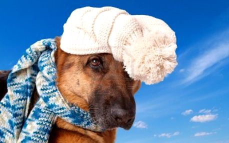 Kvalitný svetrík Snow pre vášho miláčika vhodný aj na dlhé zimné prechádzky - teraz len za 15,50€ už aj s poštovným v cene