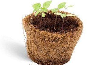 Originální dárek Grow me! Vypěstujte si jednu z dvanácti druhů rostlinek